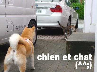 chien et chat (^^;)