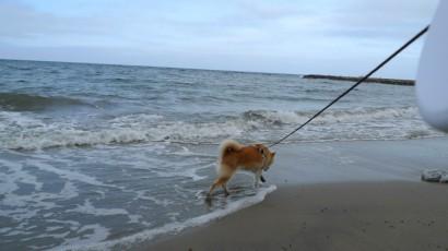 なっちゃん(たぶん)初海。海がちょっと傾いてる(←カメラ…)