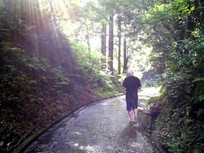 ハイドシェック散歩@山の中