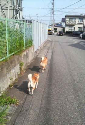 近所のなっちゃんは毎日なっちゃんを散歩に誘ってくれます