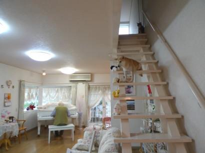 2階にいても、練習が始まるとわくわくして近づいてきます