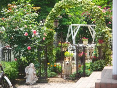 左のバラがピエール・ド・ロンサール
